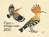 Удод – птица 2016 года